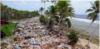 Beach covered in Ocean Plastic